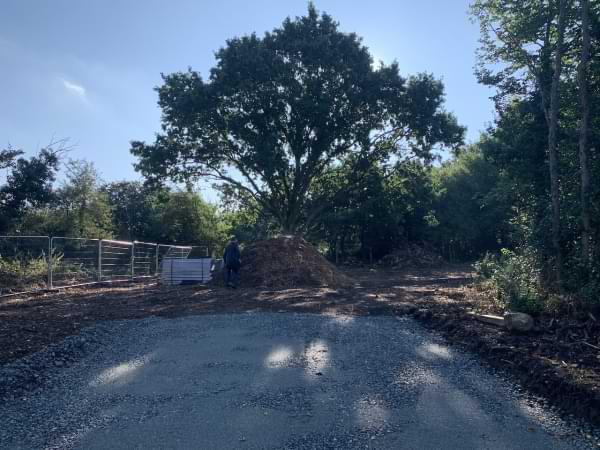 Pound Lane oak tree Aug 2020